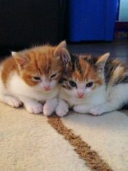 kittens for sale for free